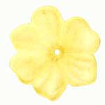 F17 Yellow