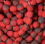 Coral Celsian Matt CFP4-9340-22501M 100pcs